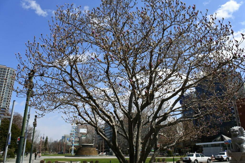 札幌大通り公園4月の風景