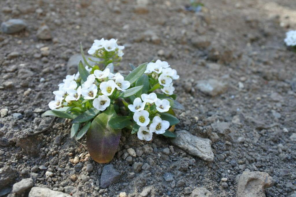 道端で見つけた小さな花
