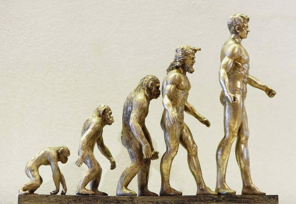 進化の過程-成長
