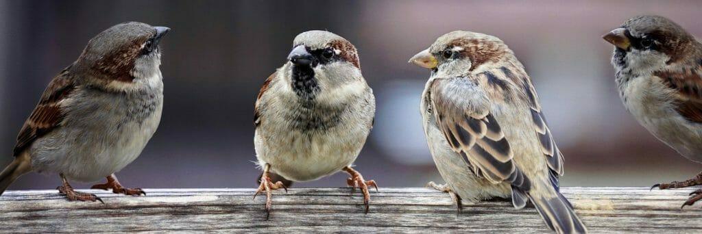 会話している雀