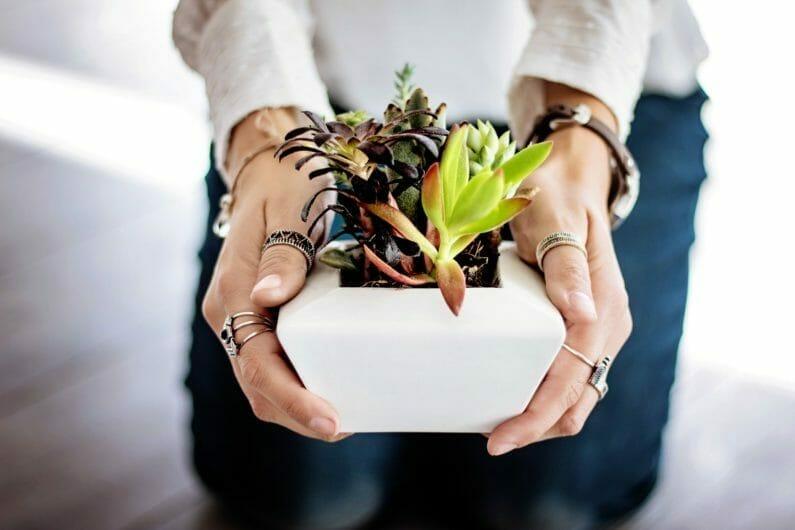 植物を差し出す女性の手-ギフトの精神