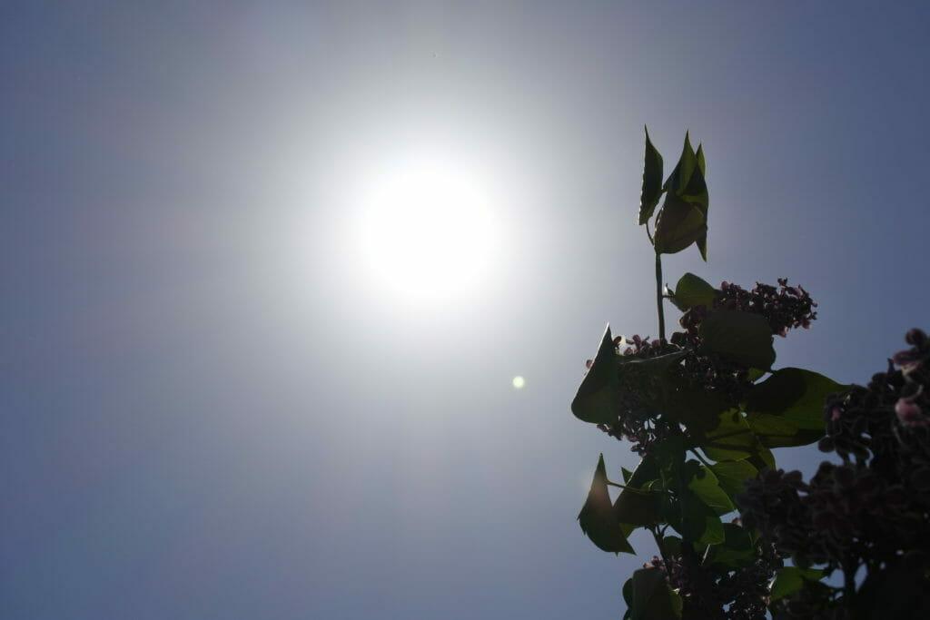 夏に向かって-太陽とフレンチライラック