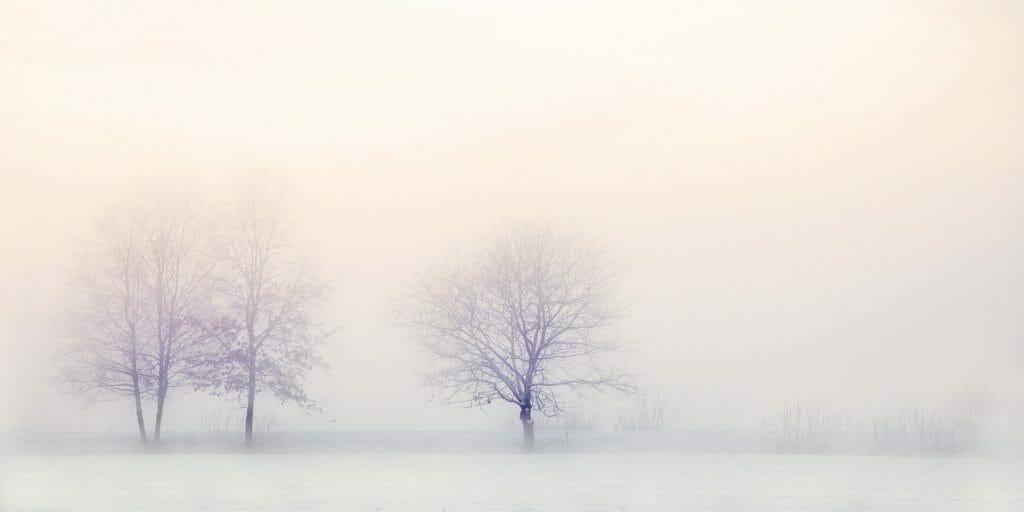 冬の木-冬季うつのイメージ